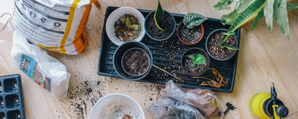 Gardening Indoors – 14 Easy Herb Plants to Grow While Sheltering in Place