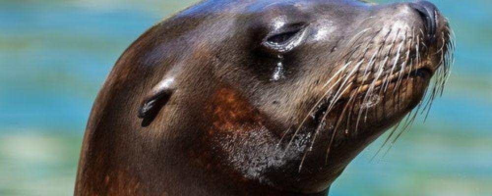 Seattle Aquarium Live Cams
